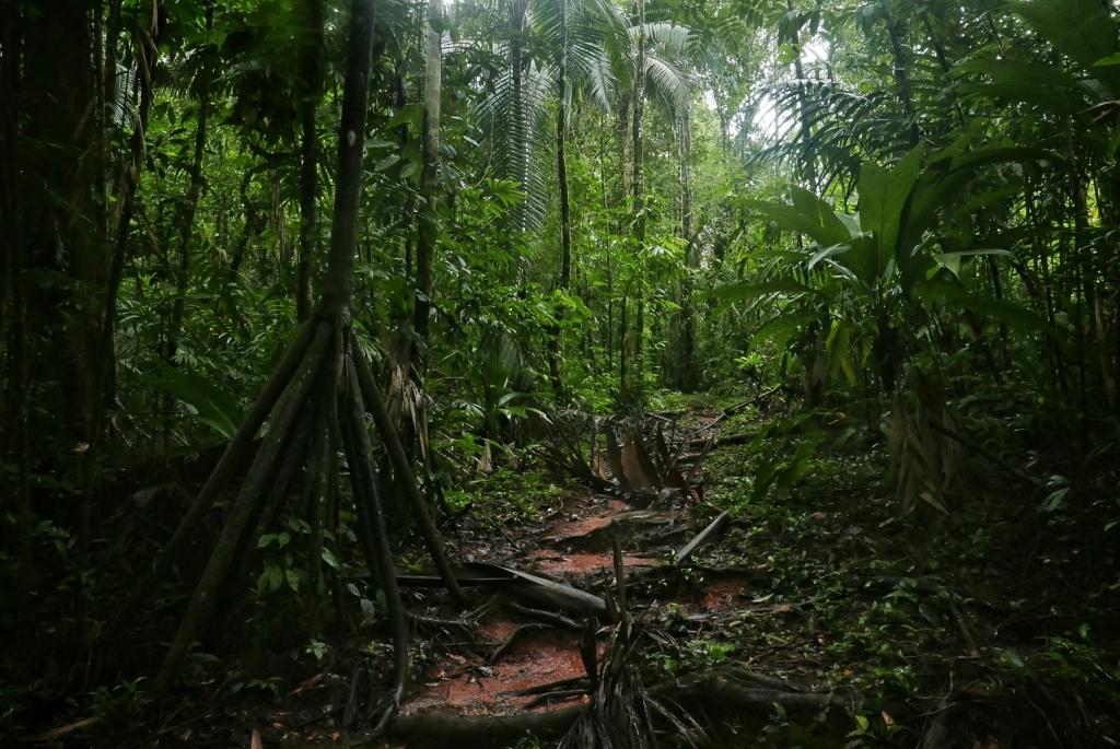 A la izquierda, un árbol caminador se va a alejando poco a poco del camino. A lo largo del tiempo, le crecen  piernas o ramas troncales desde su tronco principal, quedando otras muertas, y con ello, consigue trasladarse por el suelo.