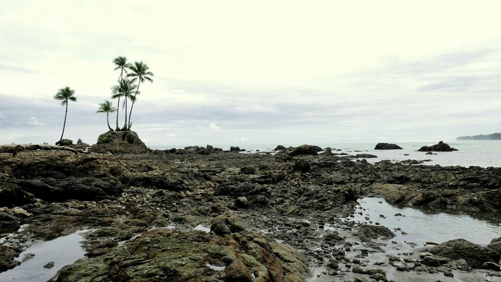 Estas cinco palmeras, como si de un oasis se tratara en medio del mar, marcan el paso entre las dos playas que recorren el tramo La Sirena - La Leona. Marcando al aventurero que le queda menos a su destino.