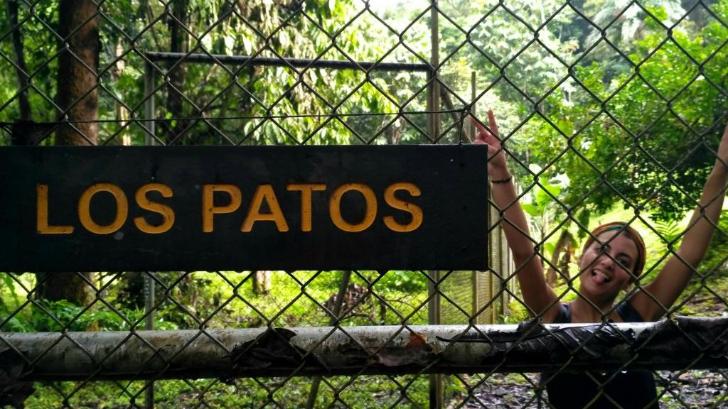Antía a la entrada de la estación de Los Patos de Corcovado