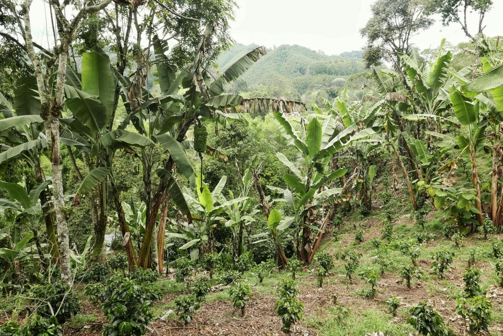 Ejemplo de variedad de plantas y árboles usados en la permacultura
