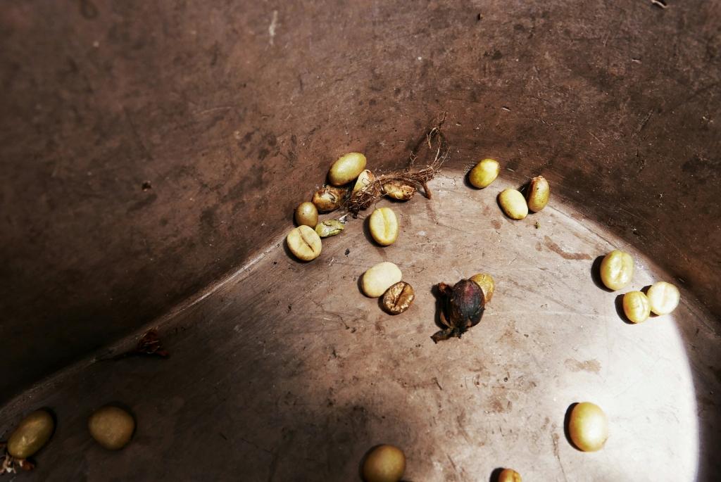 Granos de café pelados