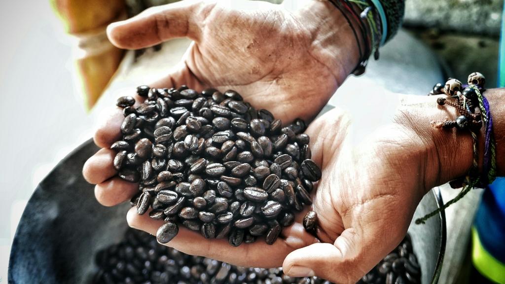 Granos de Café o tesoro negro