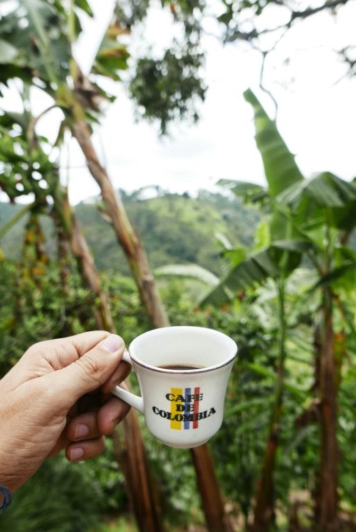 Disfrutar del café colombiano