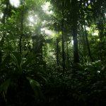 Costa Rica, la naturaleza comienza aquí