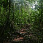 Corcovado, la aventura de Costa Rica