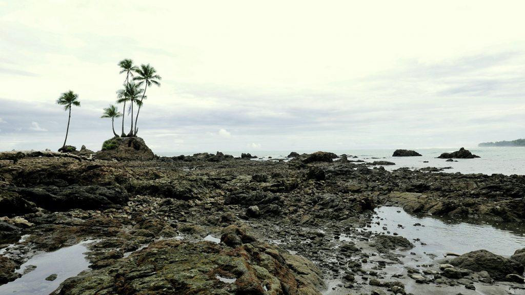 Las cinco palmeras marcan el paso entre las dos playas que recorren el tramo La Sirena - La Leona.