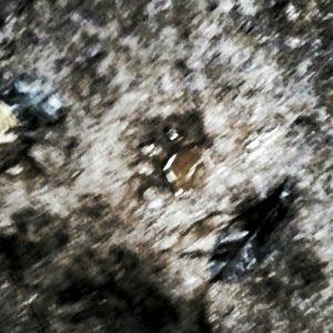 huella de jaguar sobre un charco