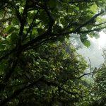 Los esperados Parques Naturales de Costa Rica
