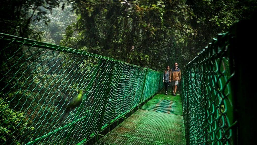 Colibrí posando ante la cámara junto a nosotros en Monteverde