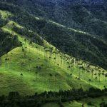 Salento, un viaje al Eje Cafetero colombiano